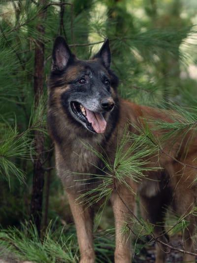 Dog, The Walking Dead saison 10 épisode 18