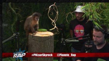 fred musa et le singe de PNL dans Planète Rap